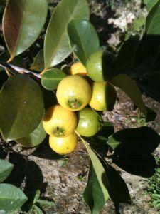 Qué es el fruto y cuál es su función