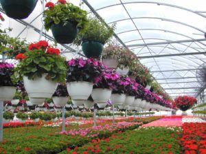 Qué es la floricultura