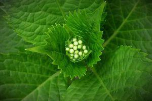 Qué es la reproducción mediante semillas