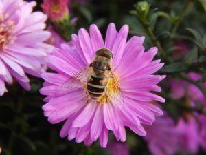 Qué ocurre cuando el polen cae en el pistilo de la flor