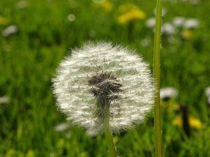 Qué relación existe entre la flor y la semilla