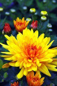Qué tipo de reproducción pueden llevar a cabo las plantas con flores