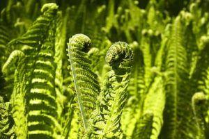 Reproducción mediante esporas