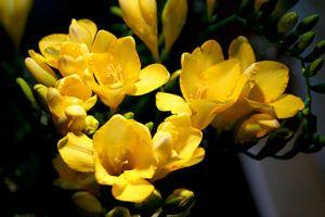 Significado de estas flores