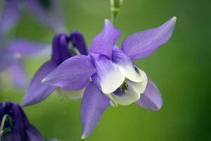 Significado de este tipo de flores