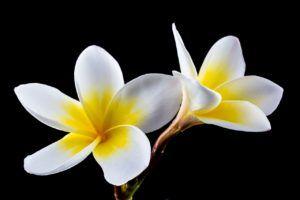 Partes de una flor - Cáliz