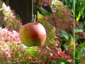 Qué significado tiene el manzano