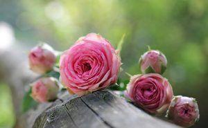 ¿Cómo preservamos una flor?