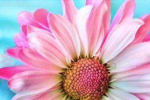 Cuidados de las flores preservadas
