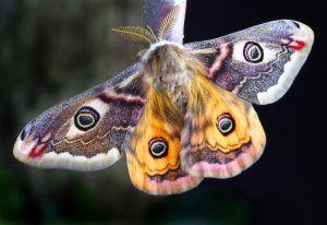 Qué plagas y enfermedades afectan al serpillo jardín