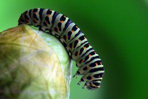 Qué plagas y enfermedades afectan a la tradescantia pallida